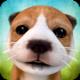 Dog Simulator MOD APK 2.2.3 (Unlimited money)